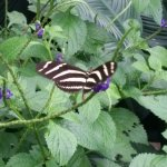 Butterfly just landed..