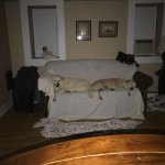 Photo de The Paw House Inn
