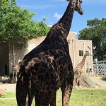 can get very close to giraffes