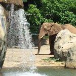 very nice elephant area