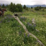 Photo de Trails End Horse Adventures