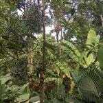 Photo of Bali Botanica Day Spa