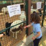 The goat farm.