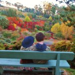 The garden in its stunning autumn colours.