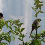 Birds near top