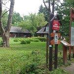 Photo of Bialowieza Forest