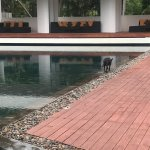 Stray dogs by the pool and resturant and lizards in private pool daily