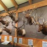 Photo de Rocky Mountain Elk Foundation
