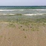 Photo de Paradise Inn Beach Resort