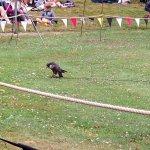 tricking the bird to haunt the fake rabbit