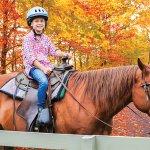 Rocking Horse Ranch Resort-billede