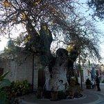 Old terebinth tree