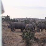 5 white rhino playing.