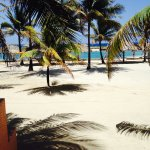 Foto de Parrot Tree Beach Resort