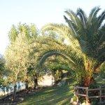 Liegewiese direkt am Gardasee