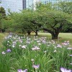 Hamarikyū-Park Foto