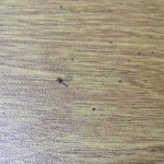 On bedstand - dead fly - one of many.