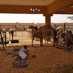 Photo of Camel Souk