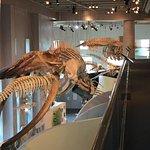 Foto de North Carolina Museum of Natural Sciences