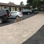Deer walking by 4
