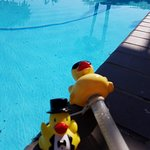 Mr.McFinnegan in San Diego California his new buddy Ducky the pool Thermometer