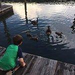 Grandson enjoyed the ducks on the dock after dinner