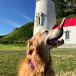 Dog Friendly Heceta Head Lighthouse