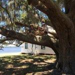 Cumberland Island National Seashore Foto