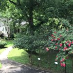 Crepe myrtles help us enjoy the summers' heat & humidity