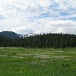 Paradise Meadows