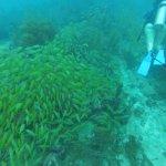 Photo of Felipe Diving Center
