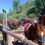 Mellow horses at Deer Valley stables