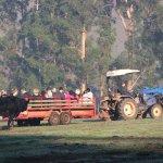 Daily hay ride