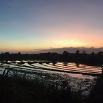 Sunset rice fields view from the Deluxe Rooms