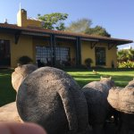 The nice round rumps of scupltural hippos greeting the sun at Jacana Lodge.