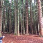 Photo de Redwoods, Whakarewarewa Forest