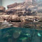 Photo of Osaka Aquarium Kaiyukan