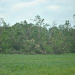 Mini-Tornado damage, Natchez Trace, MS