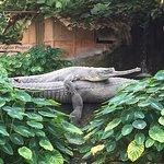 Photo de La Ferme aux Crocodiles