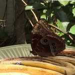 Foto de Butterfly World