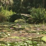 Stone bridge and lily pond