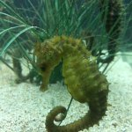 Photo of Aquarium Pula