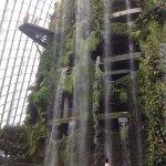 Photo de Cloud Forest