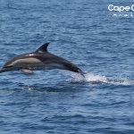 Photo of Cape Cruiser