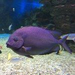 The underwater life inside the Sealife Sanctuary
