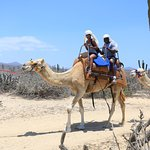 Photo de Outback & Camel Safari