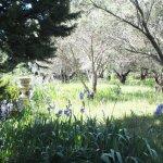 Photo de Jardins de l'abbaye Saint-André
