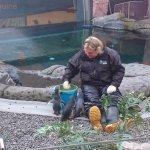 feeding blue penguins