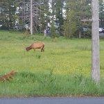 More wildlife beside D loop