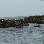 Seacoast Safaris Foto